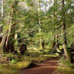 Mysteries of the Moss Garden