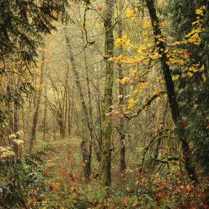 The Art of Natural Bainbridge