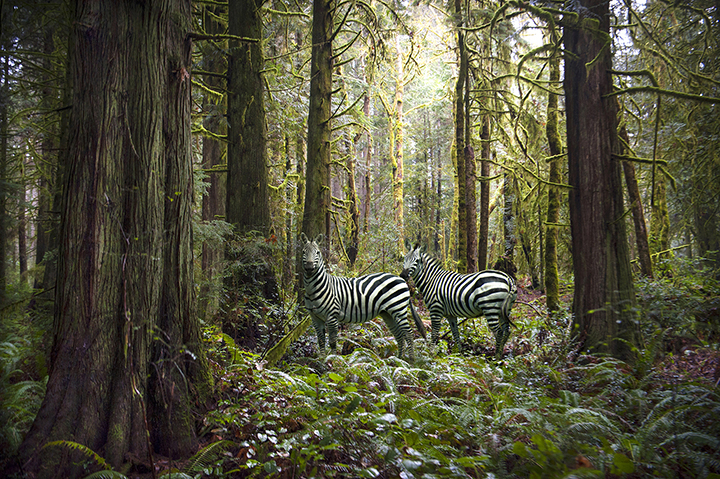 THE PANGEA SERIES: PHOTOGRAPHY BY MICHAEL NALLEY