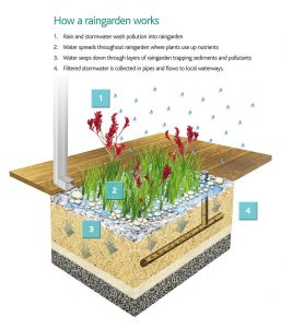 Rain Gardens and Much More