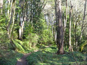 Blakely Harbor Park Trail