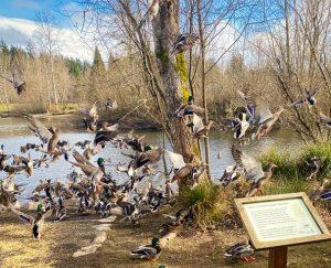 Ducks flying near pond